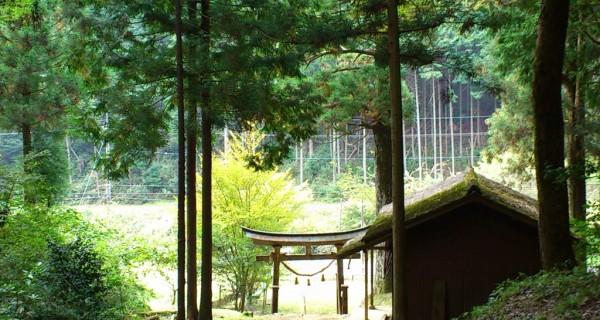 近くの神社 御神木か立派な杉が並んでいる